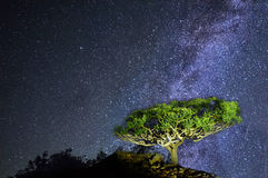 Rare endemic dragon tree on the background of the Milky Way royalty free stock photo
