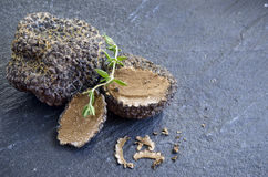 Rare and expensive black truffle Royalty Free Stock Photos