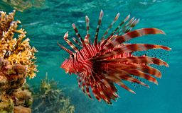 Rare  fish  animals Stock Photography
