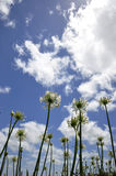 Rare flowers under the blue sky Stock Photography
