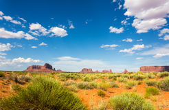 Rare green nature in desert of Monument Valley Royalty Free Stock Photo