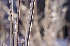 Rare ice storm in Ontario creates beautiful winter scene. Branches covered in sparkling ice after an ice storm Stock Photography