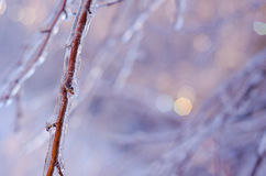 Rare ice storm in Ontario creates beautiful winter scene. Branches covered in sparkling ice after an ice storm Royalty Free Stock Images