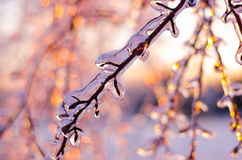 Rare ice storm in Ontario creates beautiful winter scene. Branches covered in sparkling ice after an ice storm Royalty Free Stock Photography