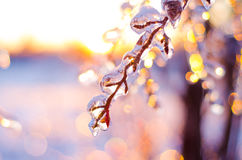 Rare ice storm in Ontario creates beautiful winter scene. Branches covered in sparkling ice after an ice storm Royalty Free Stock Photo