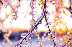 Rare ice storm in Ontario creates beautiful winter scene. Branches covered in sparkling ice after an ice storm Royalty Free Stock Photos