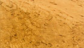 Rare karelian birch texture. Varnished Karelian birch texture - rare beautiful wood Stock Photography