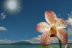 Rare orchid on spring seaside. Royalty Free Stock Photo