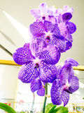 Rare orchids in Paragon bangkok orchid paradise 2014 Royalty Free Stock Photos