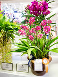 Rare orchids in siam paragon bangkok 2014 Royalty Free Stock Photography