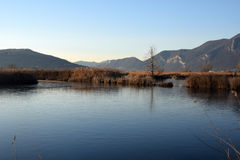 The rare phenomenon of the frozen bogs of Lake Iseo - Brescia - Stock Images