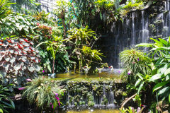 The rare plant near the cascade Stock Photos