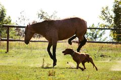 Rare shot of a horse and dog in a pasture Stock Photo