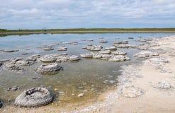 Rare Stromatolites Stock Photography