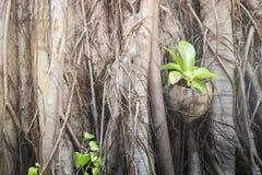 Rare texture of tree bark Royalty Free Stock Photos