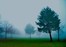 Some trees view on the misty morning royalty free stock image