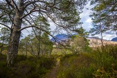 View of the post-glacial Caledonian Forest at Beinn Eighe Nature Reserve near Kinlochleven in the Highlands of Scotland. This rare and untouched landscape is royalty free stock photos