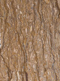 Rare variety of brown marble Royalty Free Stock Photo