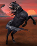 Raring Horse. Black horse in the desert raring during sunset Royalty Free Stock Photos