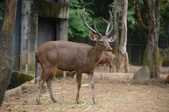 Raring i Chiangmai nattsafari royaltyfria foton
