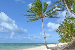 Rarotonga för landskapTitikaveka strand kock Islands Arkivfoton