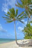 Rarotonga för landskapTitikaveka strand kock Islands Royaltyfri Foto