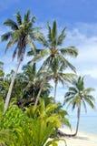 Rarotonga för landskapTitikaveka strand kock Islands Fotografering för Bildbyråer