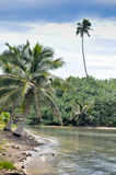 Rarotonga kock Islands Beach Royaltyfri Foto