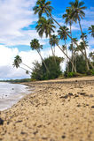 Rarotonga kock Islands Beach Fotografering för Bildbyråer