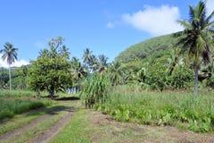 Rarotonga mountain view cook islands Royalty Free Stock Photography