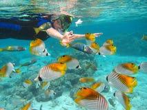 Rarotonga underwater. Snorkling in Rarotonga. Cook Islands, Oceania. South Pacific Stock Photo