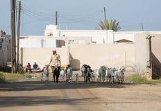 Ras Al Khaimah, United Arab Emirates, 2/02/18/2016, un hombre del árabe shepherds sus cabras a través y el pueblo abandonado en l Imágenes de archivo libres de regalías