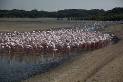 Ras Al Khor Wildlife Sanctuary Fotografía de archivo