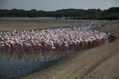 Ras Al Khor Wildlife Sanctuary Photographie stock