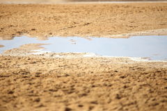 Ras Mohammad National park. Rain lake in Ras Mohammad National park Royalty Free Stock Images