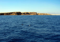 Ras Mohammed. Bottlenose Dolphins at Ras Mohammed, Egypt Stock Image