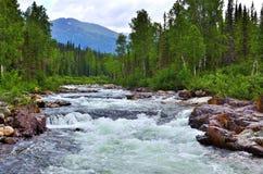 Rasa bergfloden Arkivfoto