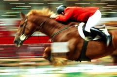 rasa końska Fotografia Royalty Free