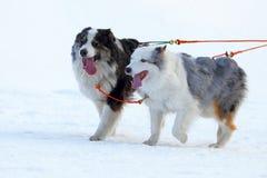 Rasa szkiców psy Obraz Royalty Free