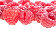 rasberries Arkivfoton