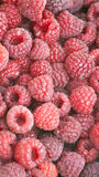 Rasberries Stock Image