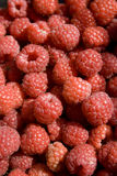Rasberries Image stock