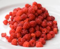 Rasberries Photographie stock libre de droits