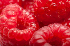 Rasberries Photo stock