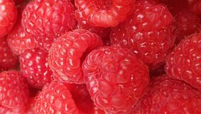 Rasberries royaltyfria bilder