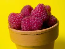 Rasberries In Pot Stock Photo