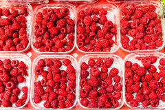 Rasberry Stockbilder