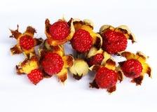 Rasberry Imagem de Stock
