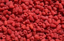 Rasberry background Stock Photography