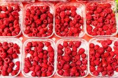 Rasberry Stock Images